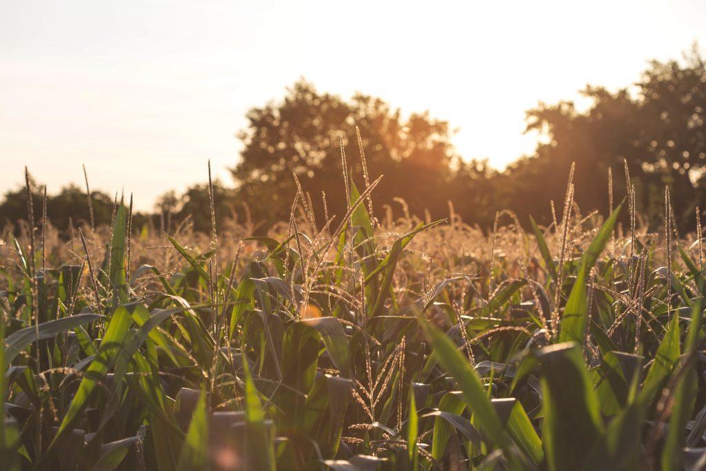 Fields of growing